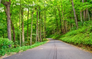 The Best Car Rides in the Smoky Mountains