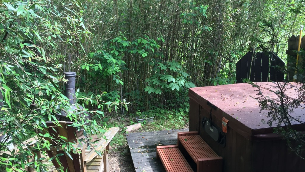 bamboo thicket surrounding hot tub at Creekwalk Inn and Cabins