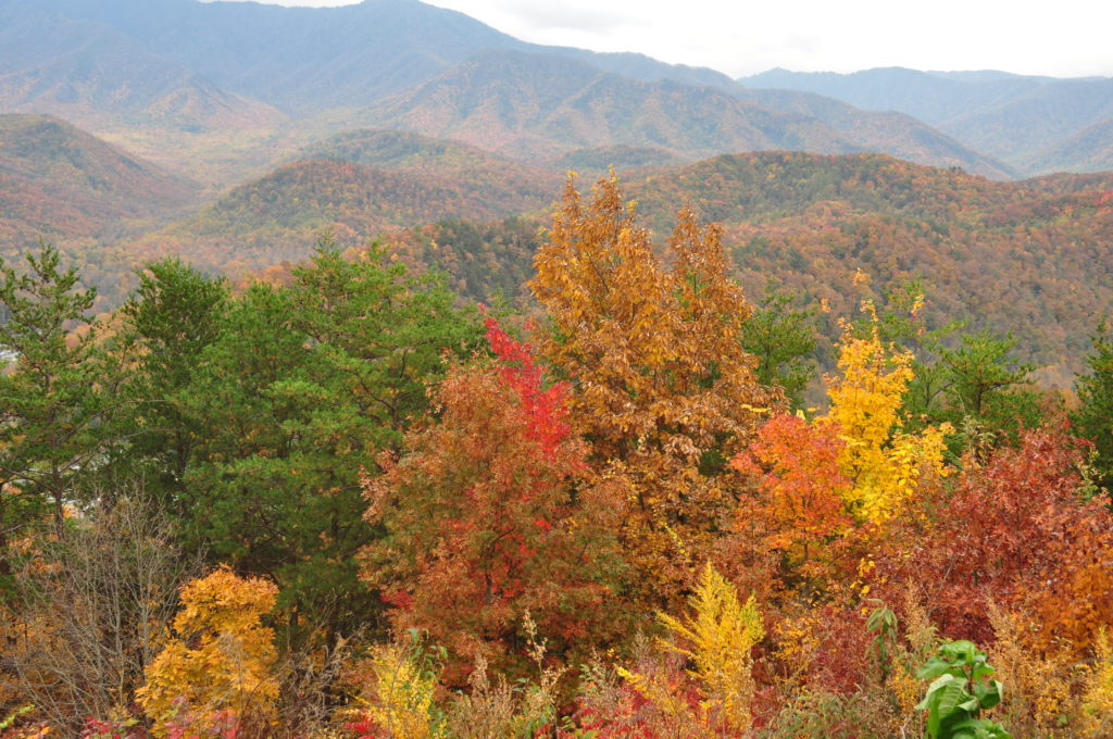 Great Smoky Mountain Fall Colors
